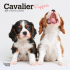 Cavalier King Charles Spaniel Puppies 2021 Mini 7x7 Cover Image