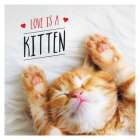 Love is a Kitten: A Cat-Tastic Celebration of the World's Cutest Kittens Cover Image