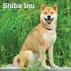 Shiba Inu 2020 Square Cover Image