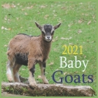 Baby Goats 2021: 2021 Wall & Office Calendar, 12 Month Calendar Cover Image
