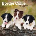 Border Collie Puppies 2021 Mini 7x7 Cover Image