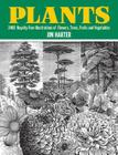Plants: 2,400 Royalty-Free Illustrations of Flowers, Trees, Fruits and Vegetables Cover Image