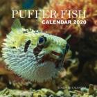 Puffer Fish Calendar 2020: 16 Month Calendar Cover Image