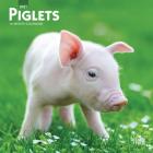 Piglets 2021 Mini 7x7 Cover Image