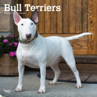 Bull Terriers 2021 Square Cover Image