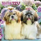 Shih Tzu 2020 Square Foil Cover Image