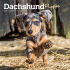Dachshund Puppies 2021 Mini 7x7 Cover Image