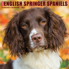 Just English Springer Spaniels 2021 Wall Calendar (Dog Breed Calendar) Cover Image