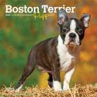 Boston Terrier Puppies 2020 Mini 7x7 Cover Image