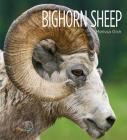 Bighorn Sheep (Living Wild) Cover Image