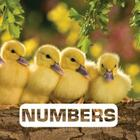 Numbers (Picture This) Cover Image