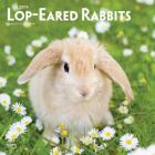 Lop Eared Rabbits 2019 Square Cover Image