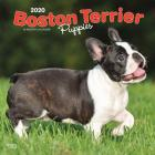 Boston Terrier Puppies 2020 Square Cover Image