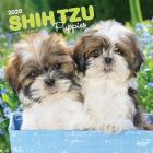 Shih Tzu Puppies 2020 Square Cover Image