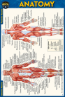 Anatomy Pocket-Sized Reference Guide (4x6 Inches) Cover Image
