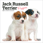 Jack Russell Terrier Puppies 2021 Mini 7x7 Cover Image