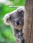 Adorable Little Koalas Full-Color Picture Book: Australia Bear Animals Photography Book Cover Image