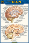 Anatomy of the Brain (Pocket-Sized Edition - 4x6 Inches) Cover Image