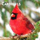 Cardinals 2022 Square Cover Image