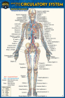 Anatomy of the Circulatory System (Pocket-Sized Edition - 4x6 Inches) Cover Image