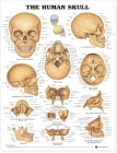 The Human Skull Anatomical Chart Cover Image