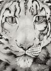 The Snow Leopard Cover Image