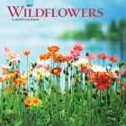 Wildflowers 2021 Mini 7x7 Cover Image