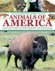An Illustrated Guide to the Animals of America: A Visual Encyclopedia of Amphibians, Reptiles and Mammals in the United States, Canada and South Ameri Cover Image