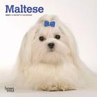 Maltese 2021 Mini 7x7 Cover Image