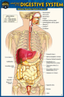 Anatomy of the Digestive System (Pocket-Sized Edition - 4x6 Inches) Cover Image