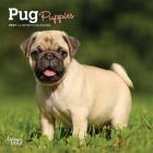 Pug Puppies 2021 Mini 7x7 Cover Image