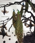 Petah Coyne: Everything That Rises Must Converge Cover Image