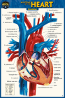 Anatomy of the Heart (Pocket-Sized Edition - 4x6 Inches) Cover Image