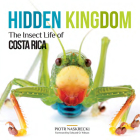 Hidden Kingdom: The Insect Life of Costa Rica (Zona Tropical Publications) Cover Image