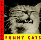 Funny Cats Postcard Book Cover Image