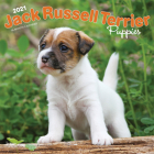 Jack Russell Terrier Puppies 2021 Square Cover Image