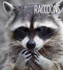 Raccoons (Living Wild) Cover Image