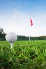 Golf Notebook: Notebook Cover Image