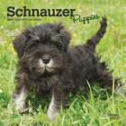 Schnauzer Puppies 2021 Mini 7x7 Cover Image