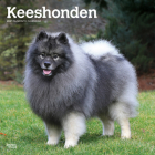 Keeshonden 2021 Square Cover Image