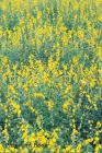 Password Book: Include Alphabetical Index With Yellow Flowers Field Springtime Summer Background Cover Image