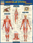 Muscular System Advanced Cover Image