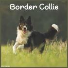 2022 Border Collie Calendar: Official Border Collie Dog breed 2022 Calendar 16 month Cover Image