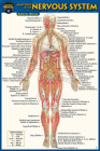 Anatomy of the Nervous System (Pocket-Sized Edition -4x6 Inches) Cover Image