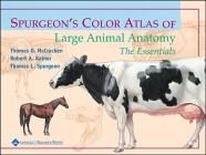 Spurgeon's Color Atlas of Large Animal Anatomy: The Essentials Cover Image