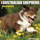 Just Australian Shepherd Puppies 2021 Wall Calendar (Dog Breed Calendar) Cover Image