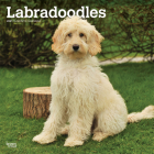 Labradoodles 2021 Square Cover Image