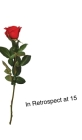 In Retrospect at 15 Cover Image