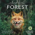 Soul of the Forest 2020 Wall Calendar: Traveling the Globe, Connecting the World Cover Image