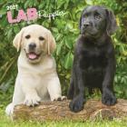 Labrador Retriever Puppies 2021 Square Cover Image
